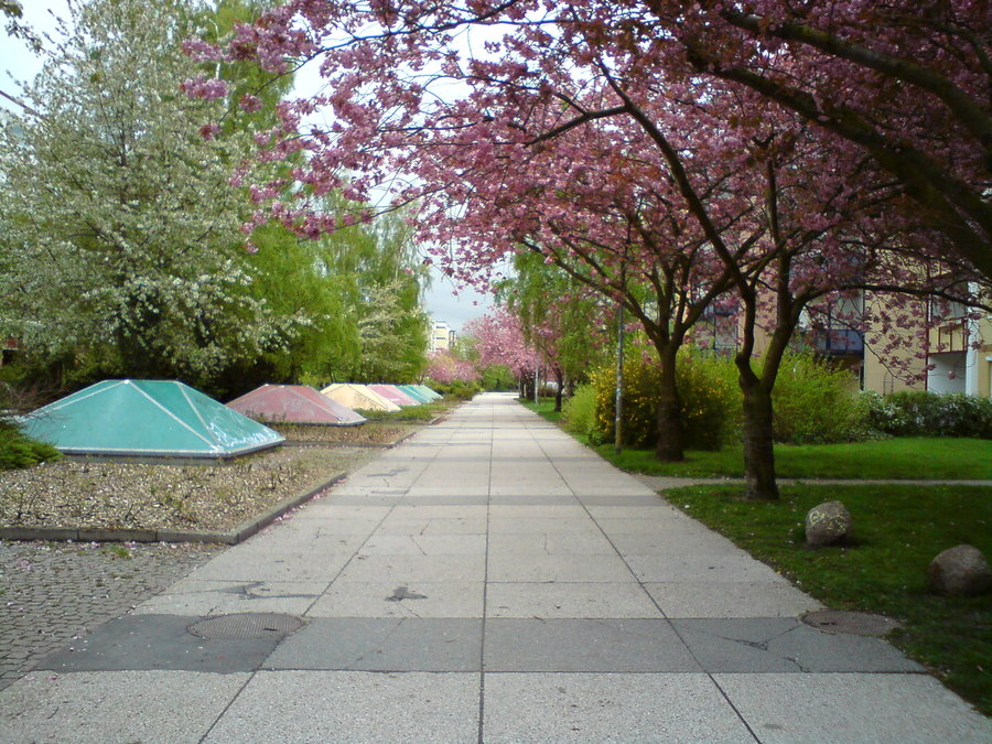 Spring Commercial Landscaping Ideas Carolina Services Inc